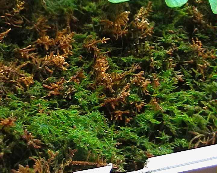 Plantes for Enlever la mousse sur les murs